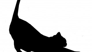 cat-stretch-silhouette-in-black