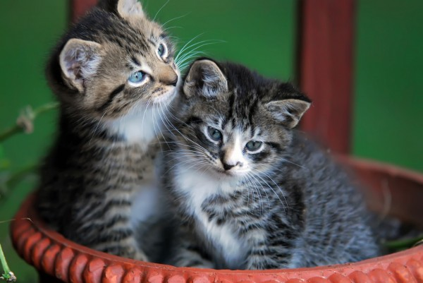 cute-kittens-in-basket