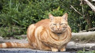 ginger-cat-1399398970IPa