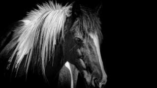 horse-1400502729BYL