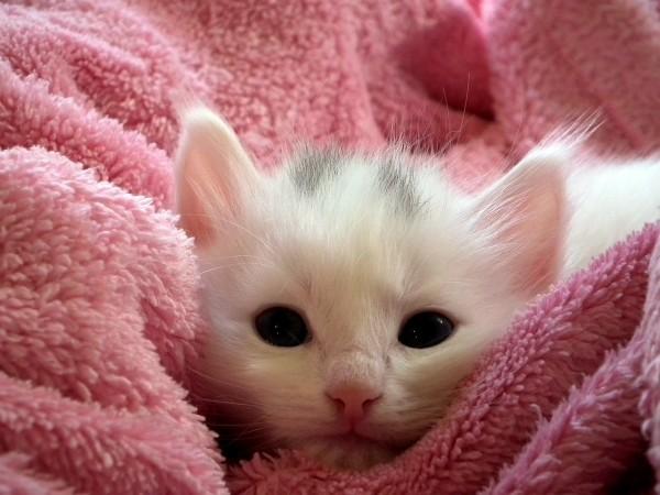 kitten-227009_1280