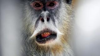 monkey-malpa