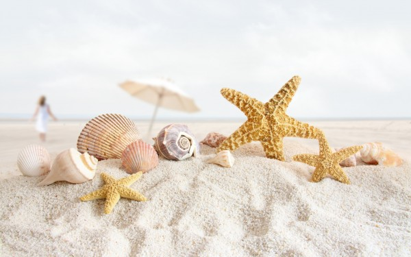 seashells_on_the_beach-wide