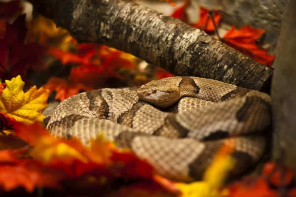 snake-waiting