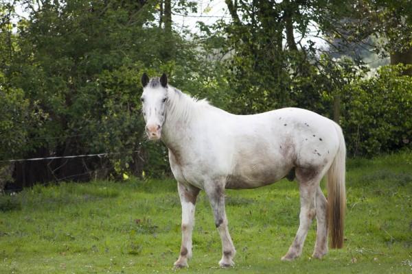 white-horse-1399399334Thy
