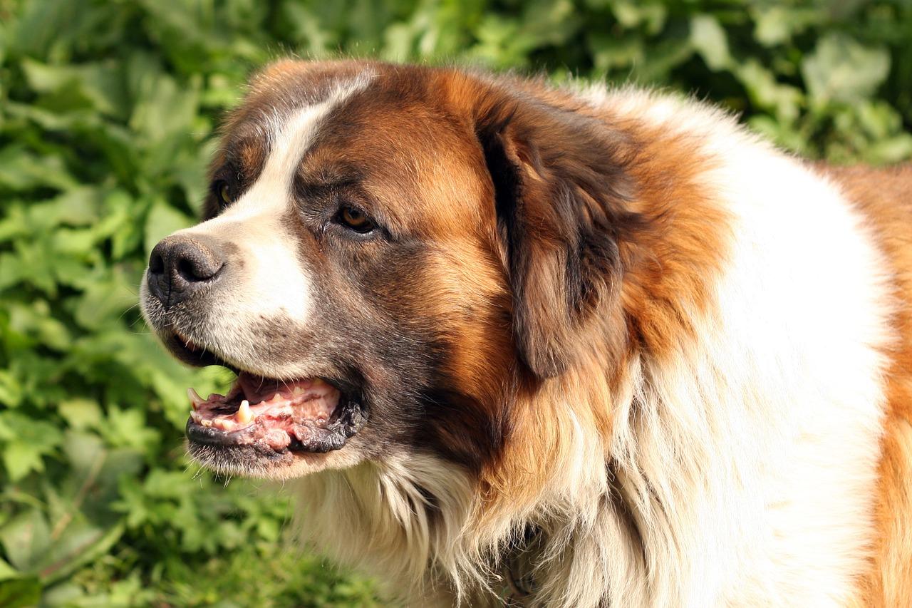 dog-1226205_1280