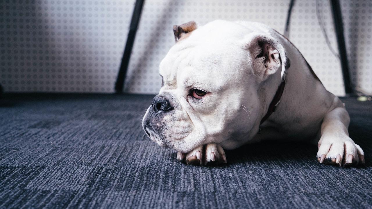 dog-1246029_1280