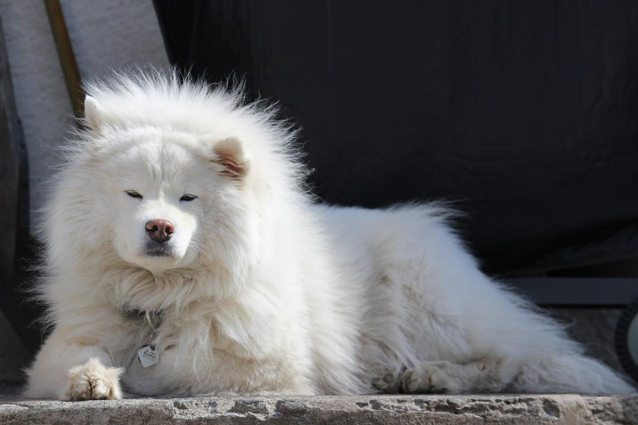 dog-1256219_1280