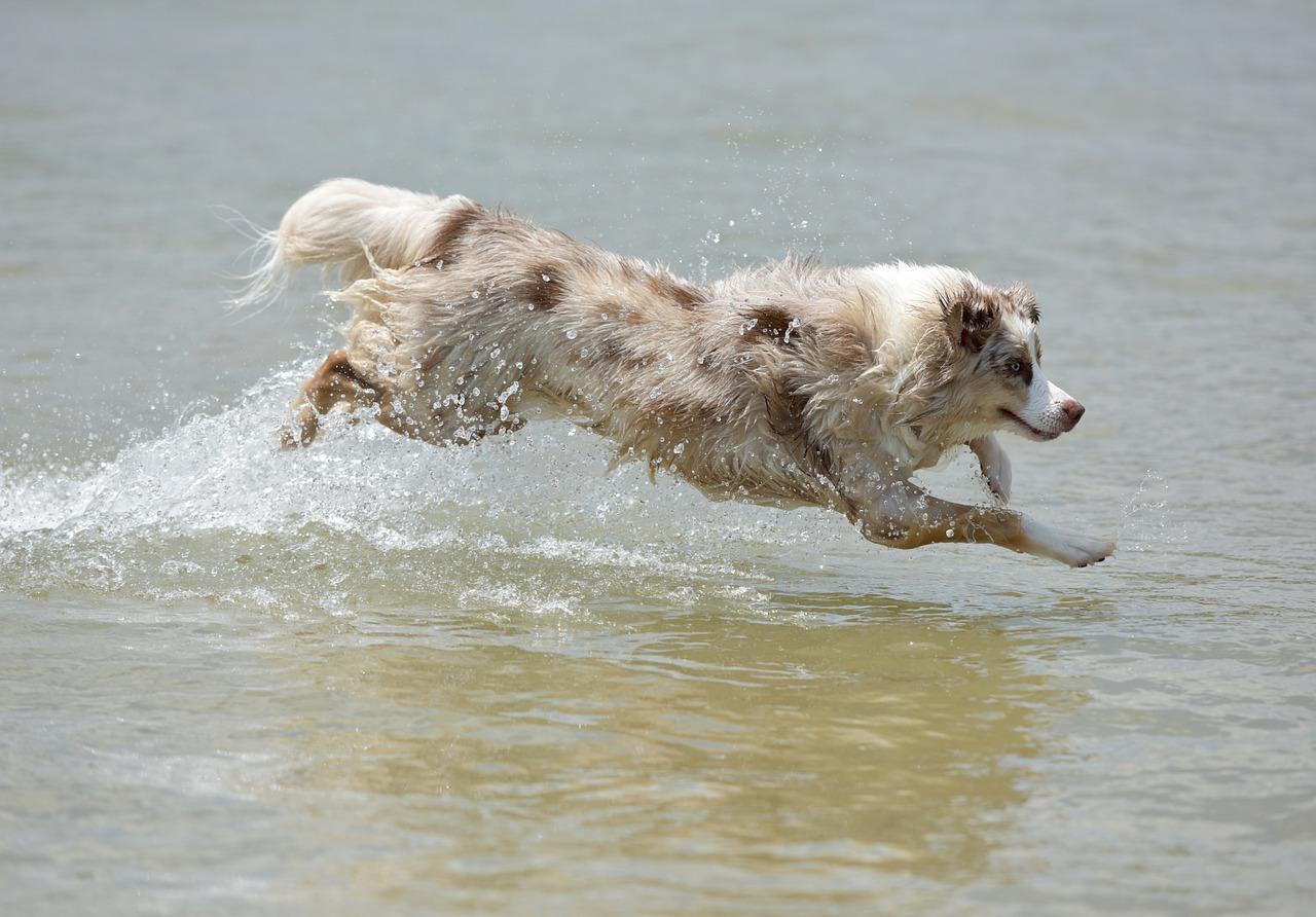 dog-1411405_1280