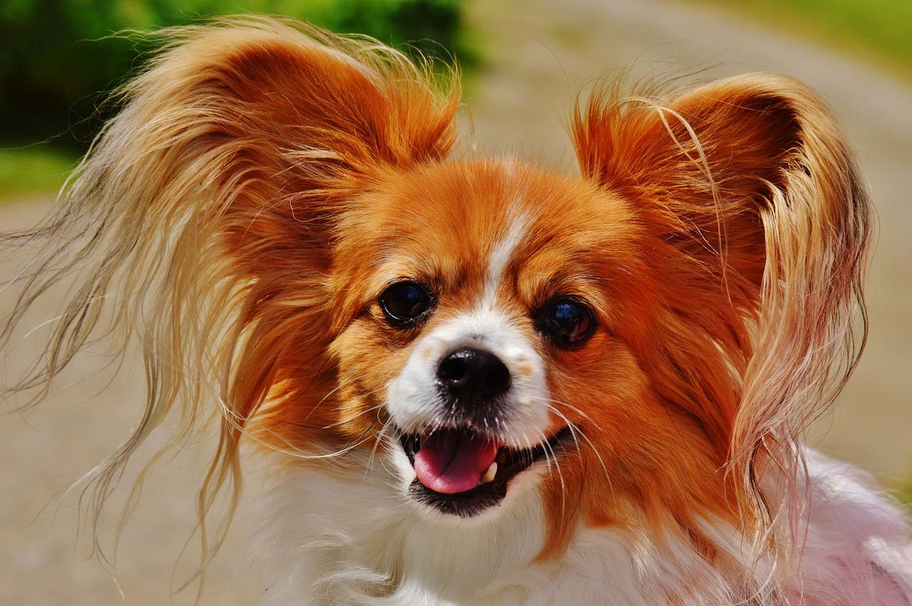 dog-1555958_1280