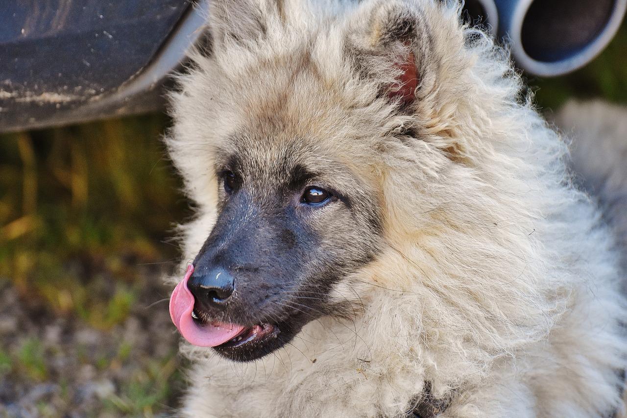 dog-1585255_1280