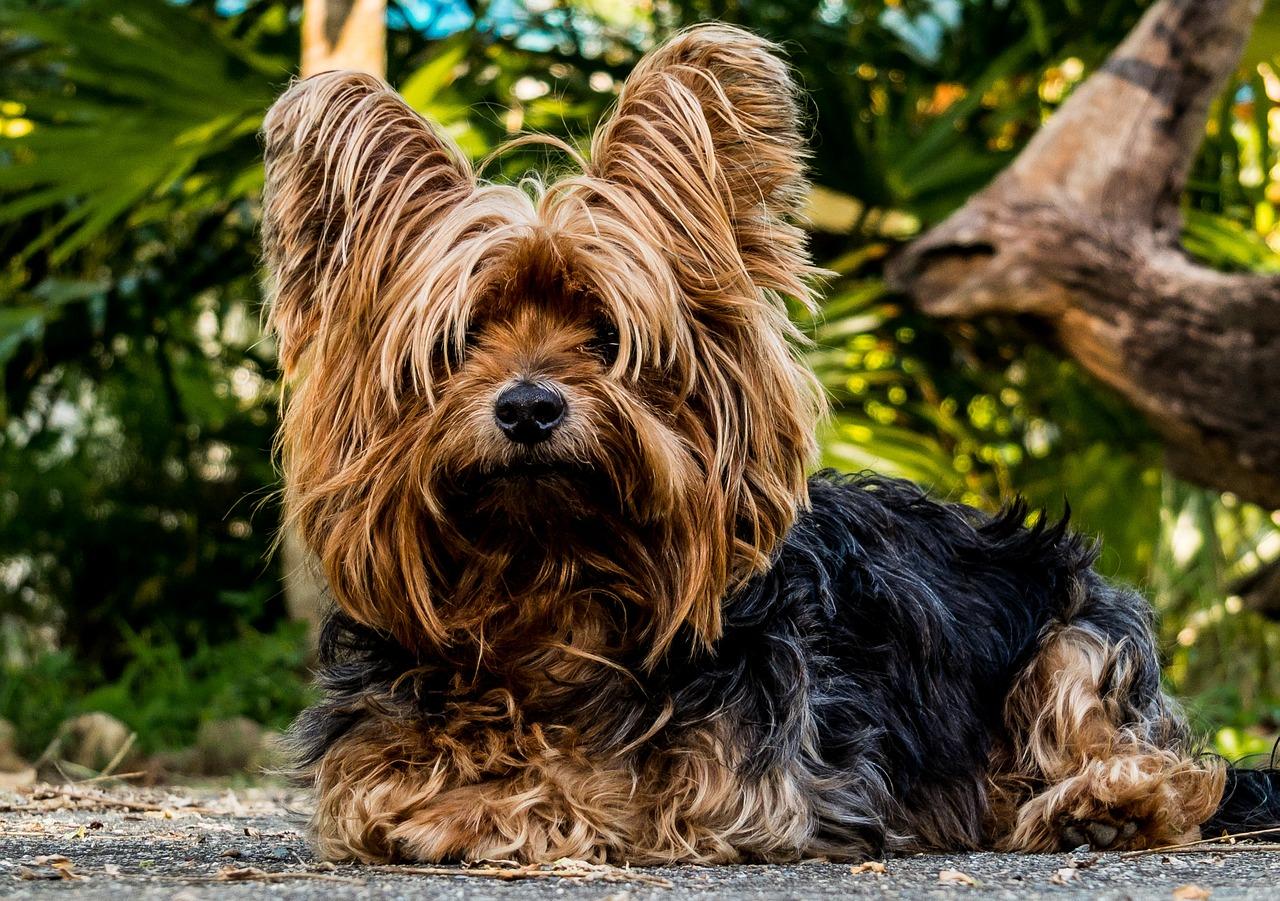 dog-216282_1280