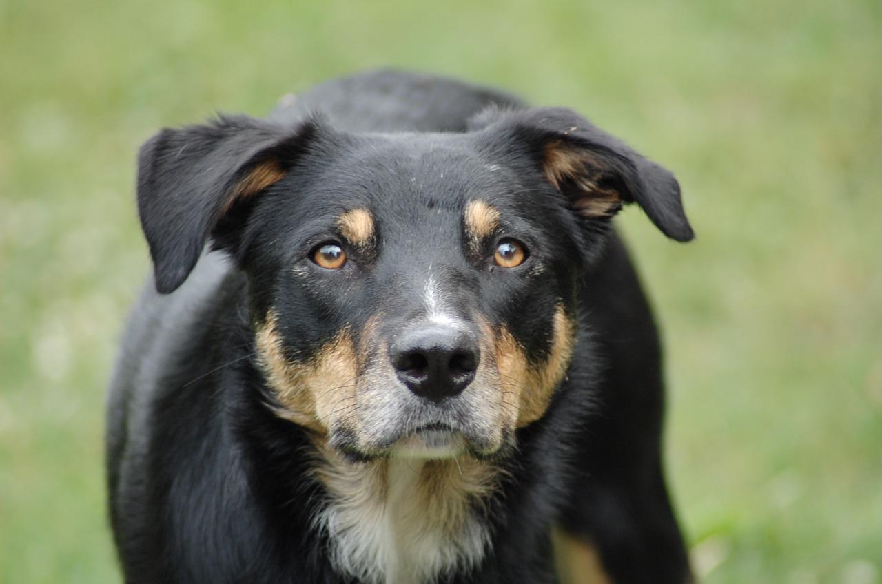 dog-793243_1280
