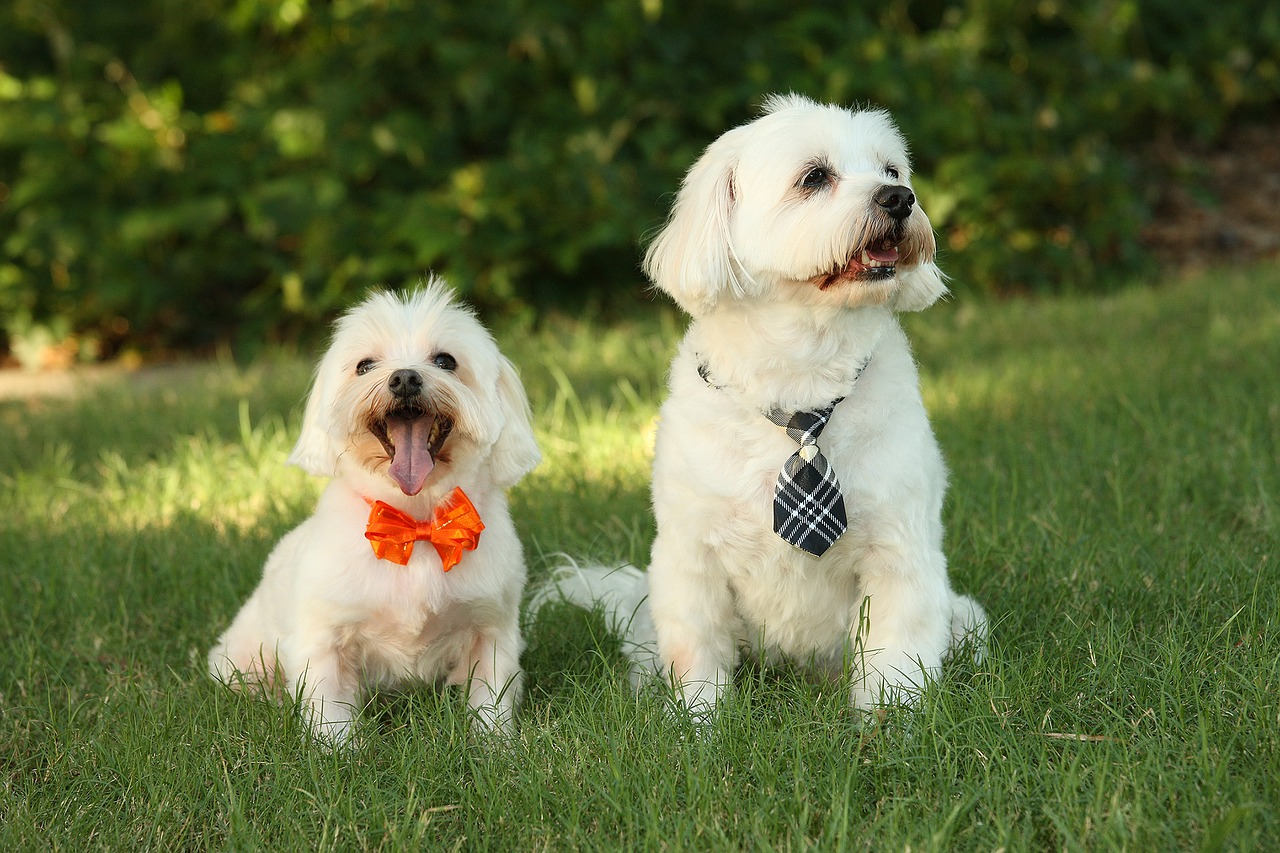 dogs-1613563_1280
