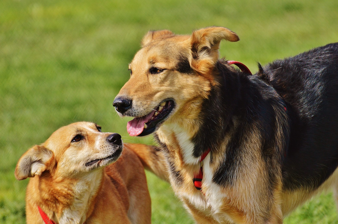 dogs-1615909_1280