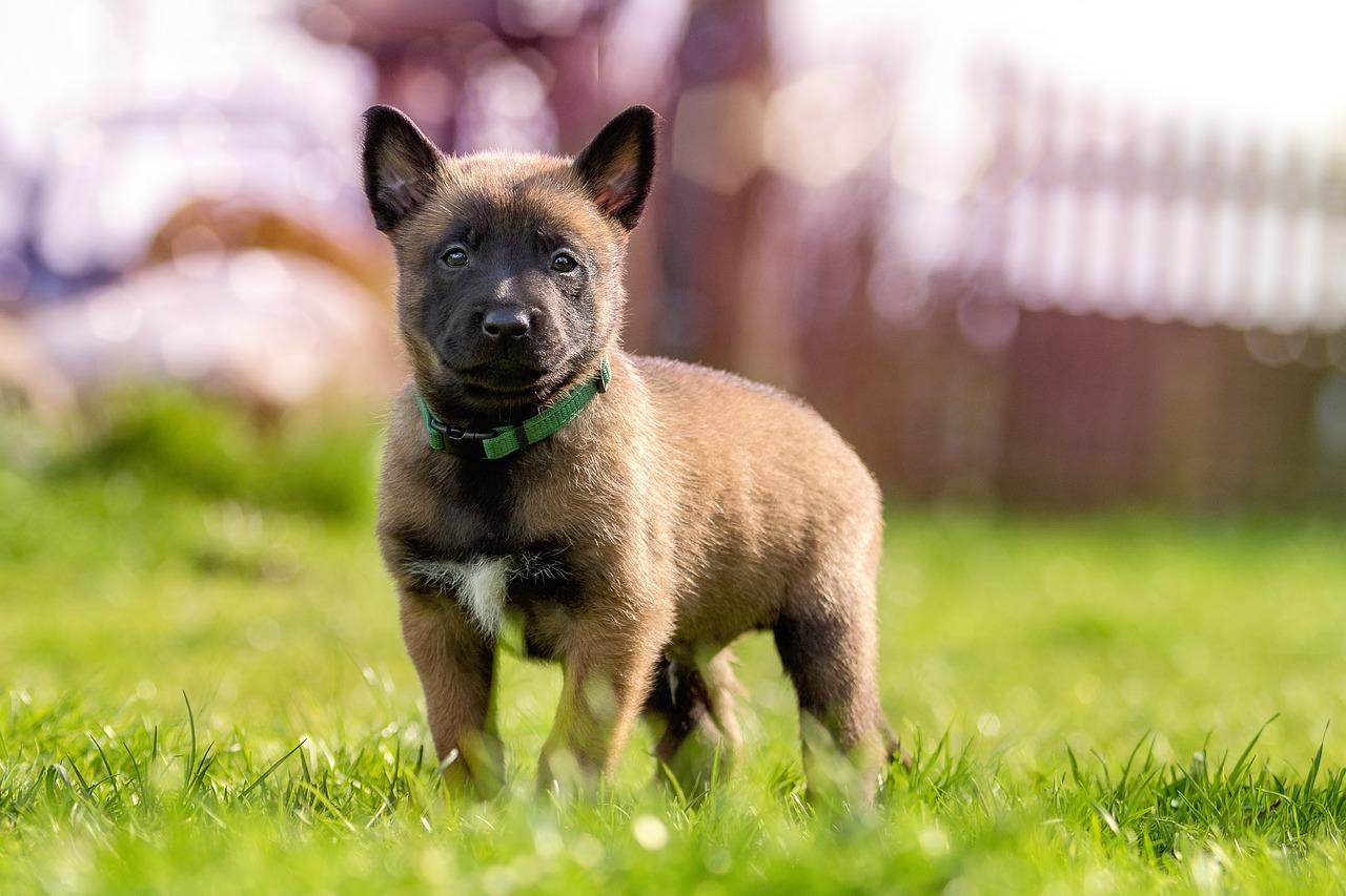puppy-1726414_1280